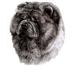 Chow Chow T-Shirt - Eye Catching Detail
