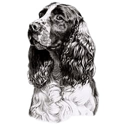 Cocker Spaniel T-Shirt - Eye Catching Detail