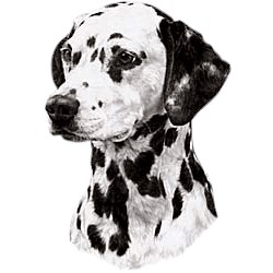 Dalmatian T-Shirt - Eye Catching Detail