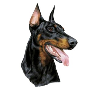 Doberman Pinscher T-Shirt - Eye Catching Detail