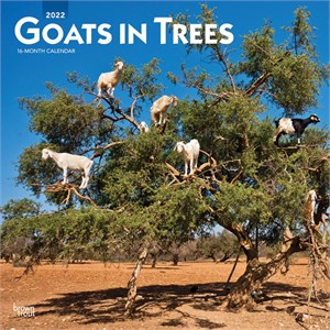 Goats in Trees Calendar 2014