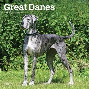Great Danes Non Cropped Calendar 2013