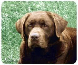 Chocolate Lab Mousepad