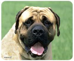 Mastiff Mousepad