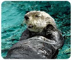 Sea Otter Mousepad