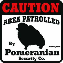 Pomeranian Bumper Sticker Caution
