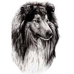 Shetland Sheepdog T-Shirt - Eye Catching Detail