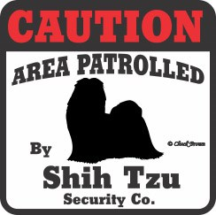 Shih Tzu Bumper Sticker Caution