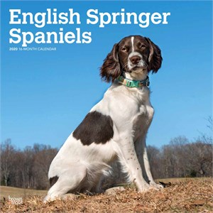  English Springer Spaniels Calendar 2013 - Portrait Studio