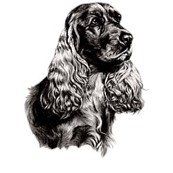 Springer Spaniel T-Shirt - Eye Catching Detail