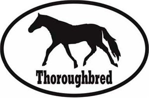 Thoroughbred Horse Bumper Sticker Euro