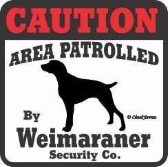 Weimaraner Bumper Sticker Caution
