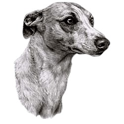 Whippet T-Shirt - Eye Catching Detail
